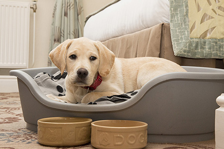 Dog beds and bowls are beds provided