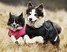 Dog Coats from Podgy Paws
