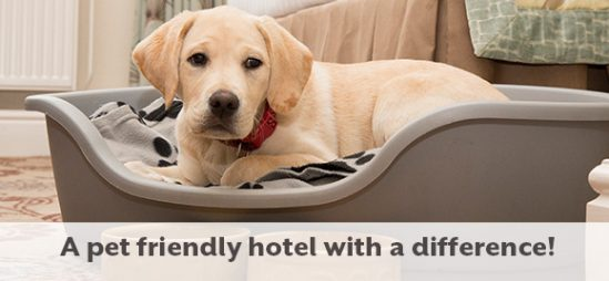 Xmas Breaks In The Uk With Our Dog Friendly